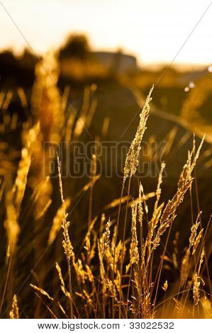 Grass Nice Illuminated During A Beautiful Sunset
