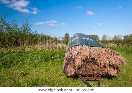 Harvested Reeds On A Trailer
