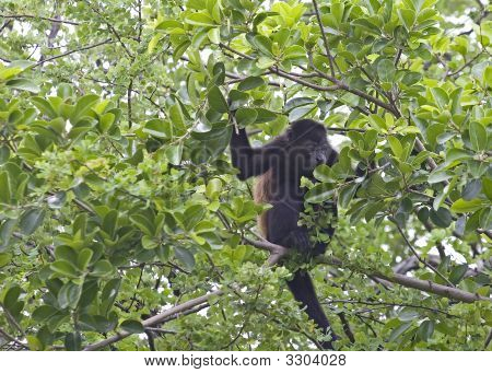 Young Monkey Eating