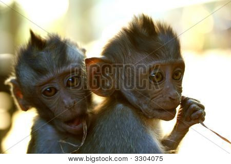 Two Young Cheeky Monkeys