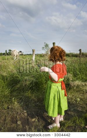 Little Girl Looking At Cow