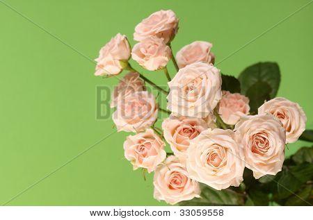 Cute roses