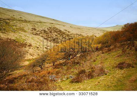 Wistman's Wood,dartmoor Devon