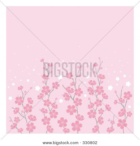 Cherry Blossoms  Horizontal