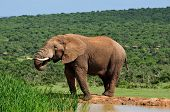 pic of terrestrial animal  - Elephant drinking water at Harpoor Dam Addo Elephant National Park South Africa - JPG