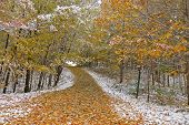 Snow fall in wood path in later autumn.
