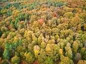 Scenic Aerial View Of Autumn Forest In Northern France, Yvelines, France poster