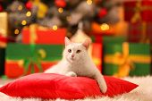 Cute White Cat On Pillow In Room Decorated For Christmas. Adorable Pet poster