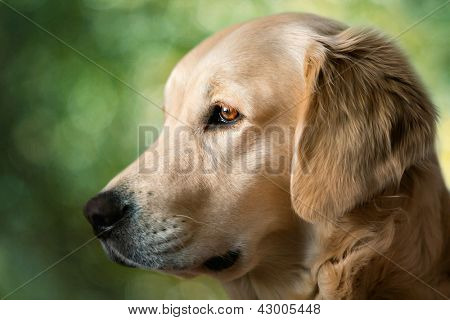 Portrait young dogs and blur background
