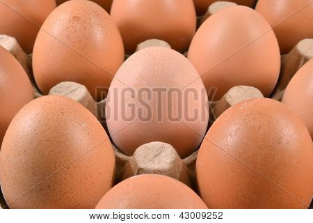 Egg carton with eggs.