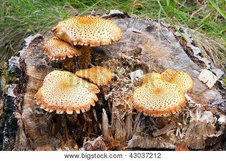 Orange Fungus On Tree