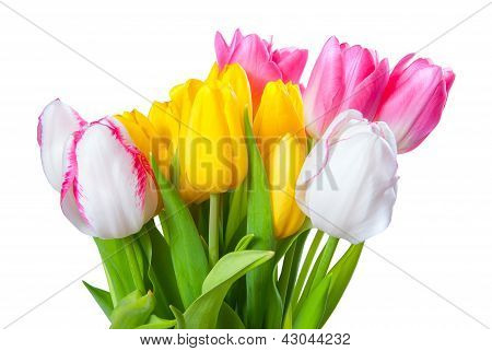 Bouquet Of Yellow, White And Pink Tulips