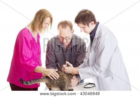 People At Veterinary Physician
