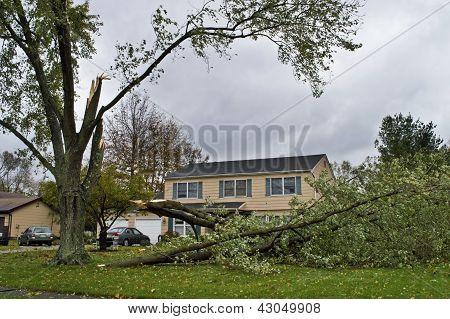 Árvore caída 6