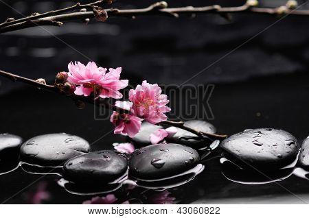 Zen pebbles. Stone spa , cherry tree branch