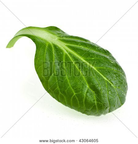 fresh green leaf spinach or pak choi closeup macro isolated on a white background