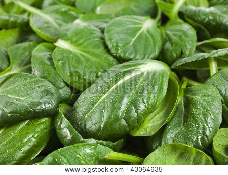 fresh green leaves spinach or pak choi texture background