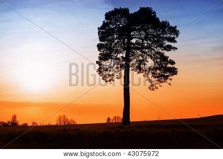 Alone tree on sunset