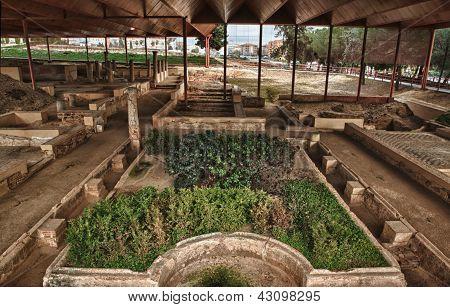 Patrician House Gardens