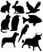Nine Animals Black Silhouettes poster