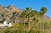 foto of piestewa  - Palm Trees With Piestwea  - JPG