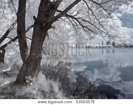 Coast Of The White Lake