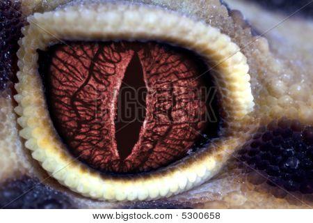 Lizard Red Eye Like Dragon