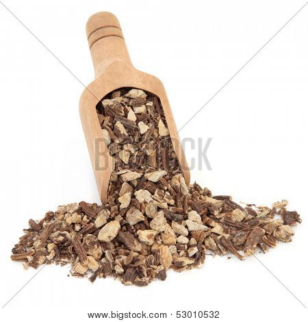 Angelica herb root used in chinese herbal medicine in a wooden scoop over white background. Dong quai.