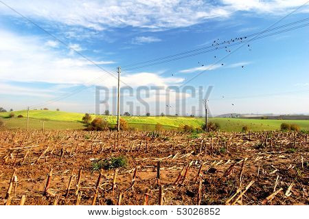 Harvested field and agriculture landscape