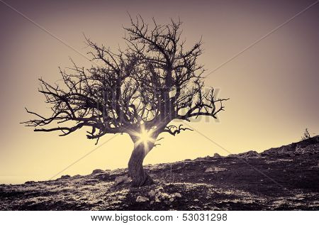 Lonely tree in mountain. Composition of nature.