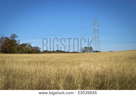 Powerlines Over Field