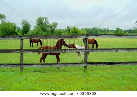 Young Horses Playing