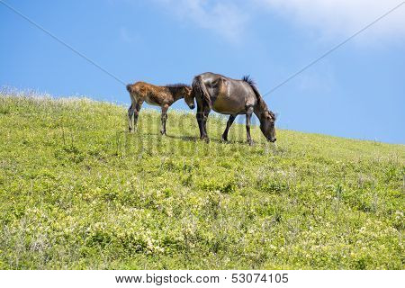 Parent and child horse