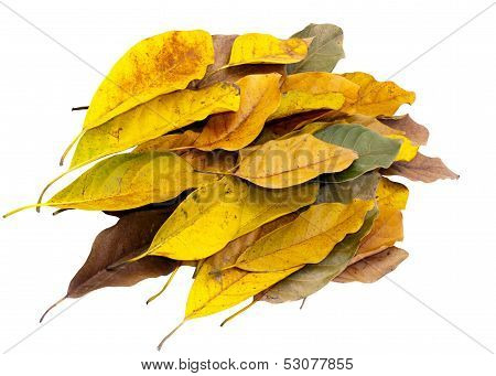 Bunch Of Leaves Blowing In Same Direction