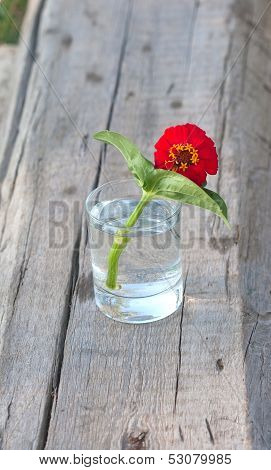 Red Flower In The Tumbler With  Water