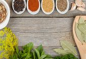 Colorful herbs and spices selection. Aromatic ingredients on wood table with copyspace