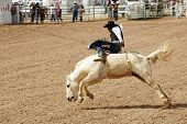 stock photo of bareback  - a bareback rider hangs on for 8 seconds to receive a score at a rodeo - JPG