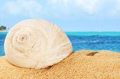 Shell On Sand Od The Caribbean