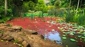 Red Algae Garden At Waimea Valley, Oahu, Hawaii