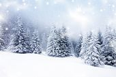 stock photo of xmas star  - Christmas background with snowy fir trees - JPG