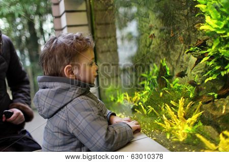 Kid Watching Fishes
