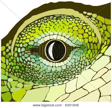 Eye of a reptile