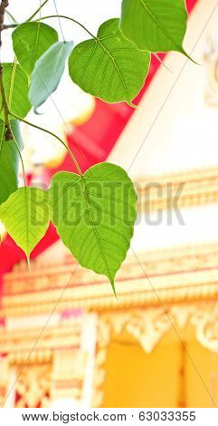 Bodhi Leaf With A Temple Background.