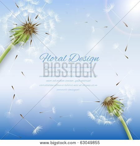 White dandelion with pollens background