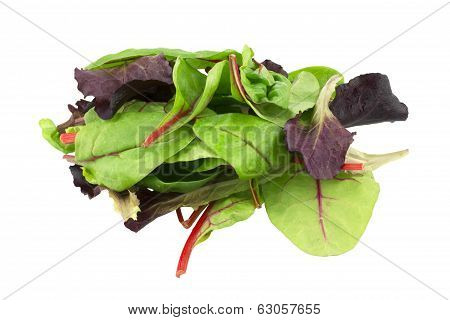 Mixed salad baby red leaf, baby spinach & red chard isolated on white
