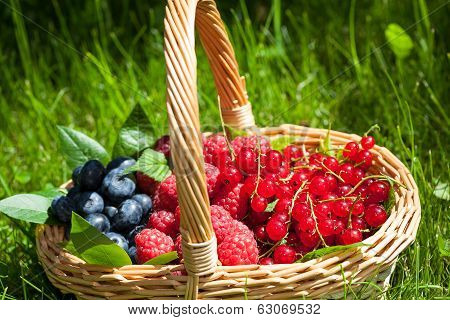 Blueberries Raspberries And Redcurrants