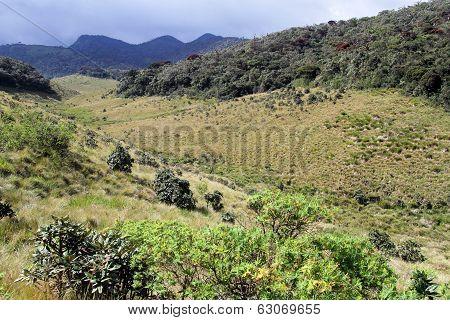 Ravine In Horton Plains