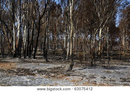 Forest Wild After Fire