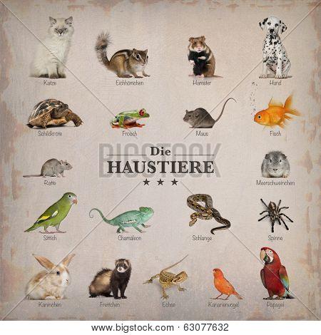 poster of pets in german