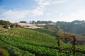 picture of gleaning  - Natural way of life on the mountain Strawberry Ranch in thailand - JPG